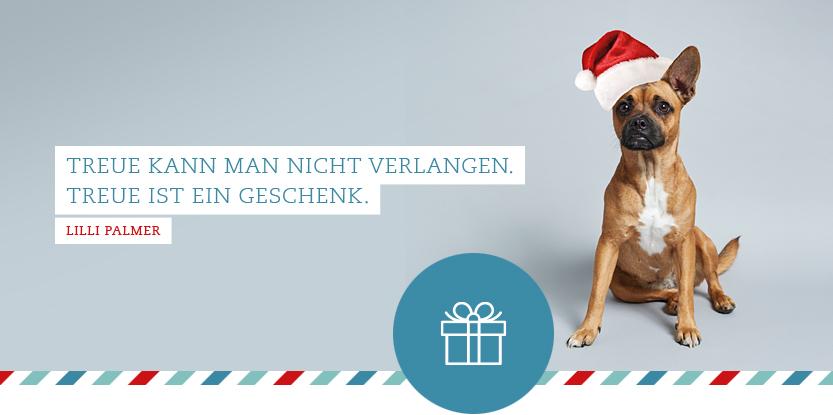 """Bild Hund Paula mit Weihnachtsmütze und dem Zitat: """"Treue kann man nicht verlangen. Treue ist ein Geschenk"""" von Lilli Palmer"""
